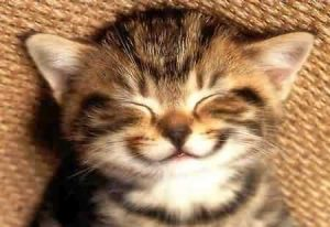 Happy kitten!